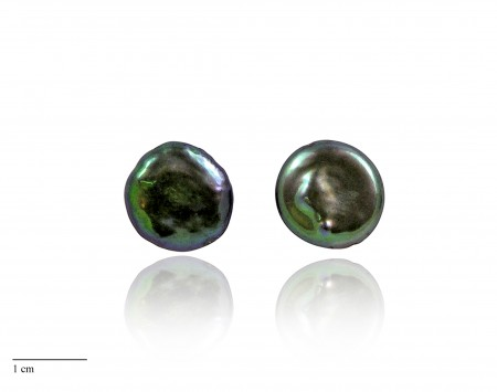 Black Freshwater Pearl Stud Earrings