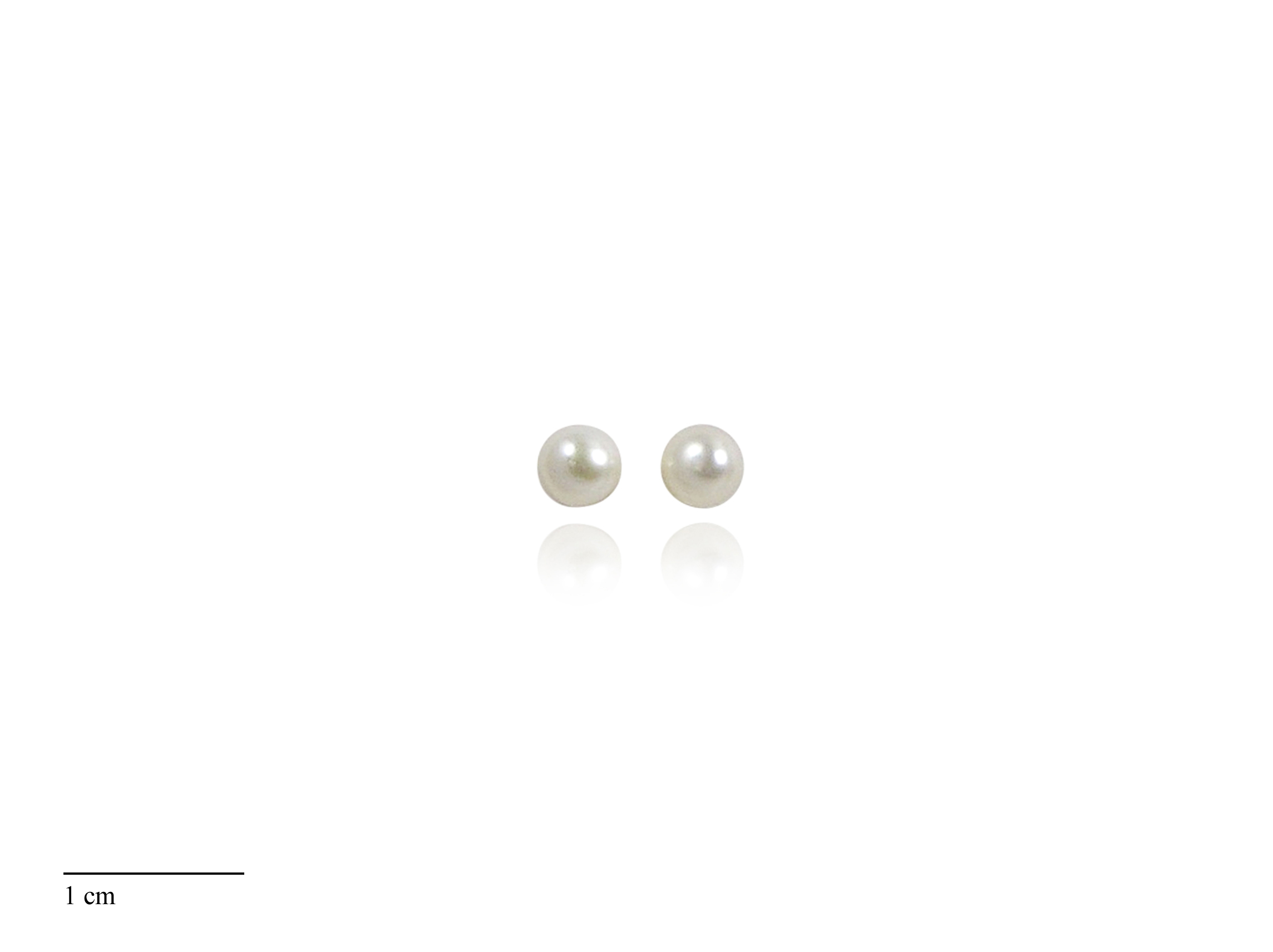 White Freshwater Pearl Stud Earrings