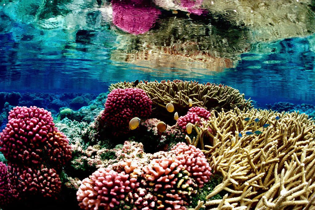 Beautiful Coral Reef under Threat