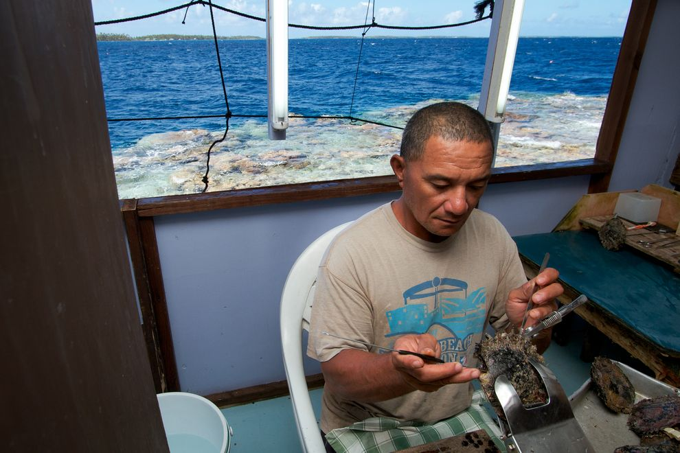 A Kamoka Pearl Farmer inserting a nucleus into a Tahitian Black Lipped Oyster
