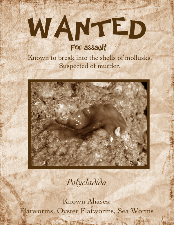 Flatworm Most Wanted Poster