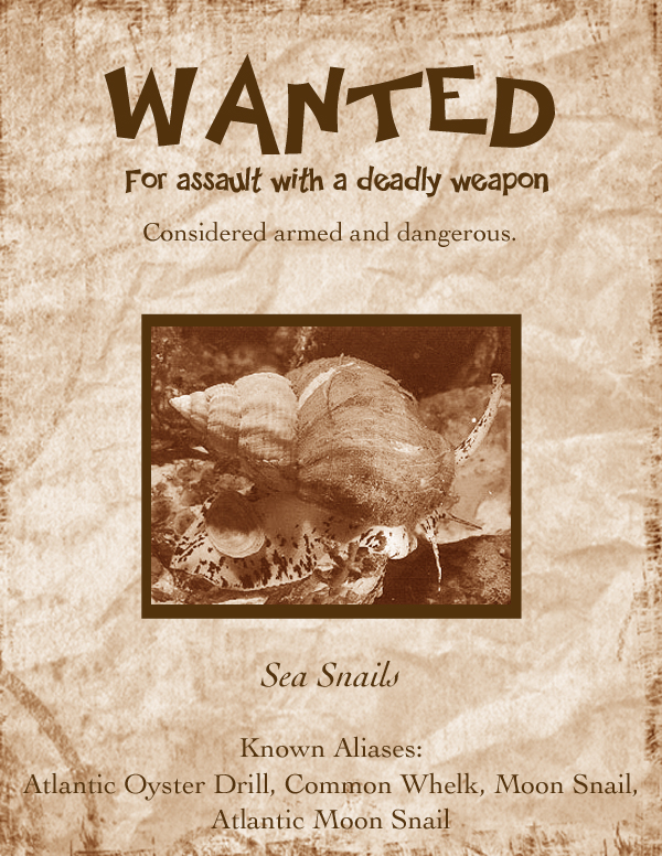 Sea Snail Most Wanted Poster