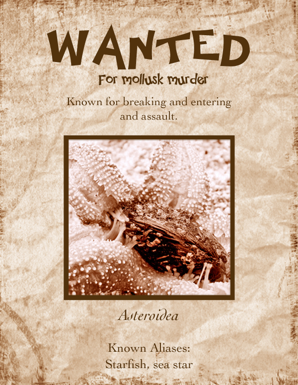 Starfish Most Wanted Poster