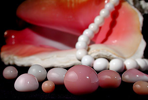 Some Conch Pearls laid out in front of a conch shell with a strand of white pearls draped over it.