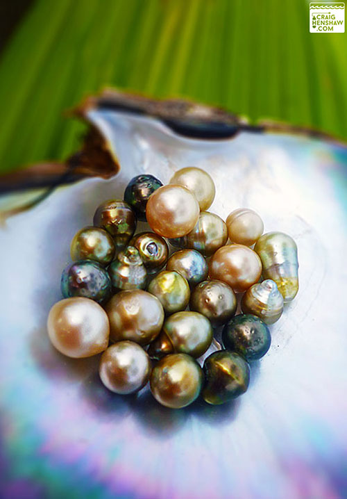 Fiji Pearls in shell