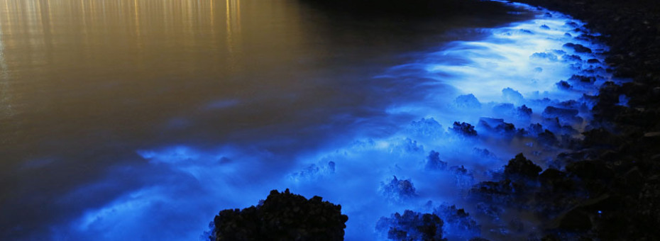 This Thursday, Jan. 22, 2015 photo made with a long exposure shows the glow from a Noctiluca scintillans algal bloom along the seashore in Hong Kong. The luminescence, also called Sea Sparkle, is triggered by farm pollution that can be devastating to marine life and local fisheries, according to University of Georgia oceanographer Samantha Joye. Noctiluca itself does not produce neurotoxins like other similar organisms do. But its role as both prey and predator tends can eventually magnify the accumulation of toxins in the food chain, according to R. Eugene Turner at Louisiana State University. (AP Photo/Kin Cheung)