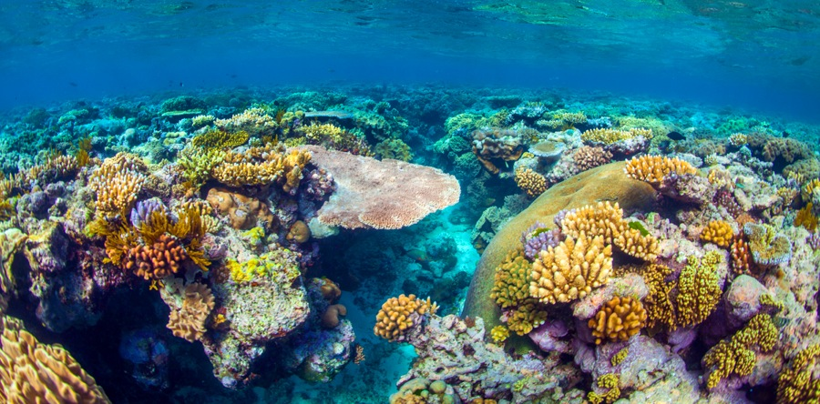 The beautiful colors once displayed across Australia's Great Barrier Reef.